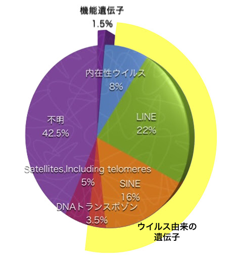 正体不明のゲノムの内訳を示す円グラフ