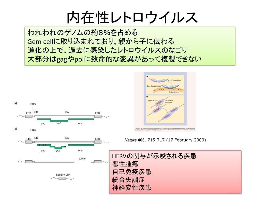 内在性レトロウイルスについて説明する図