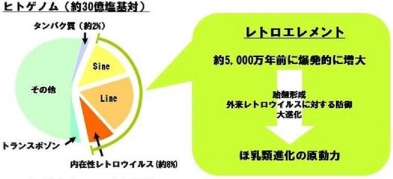 レトロトランスポゾンの爆発的増加を示す図