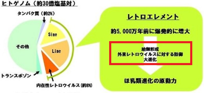 内在性ウイルスのさまざまな作用について説明する図