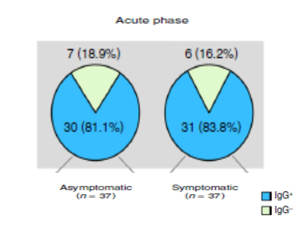 急性期のIgG抗体陽性率