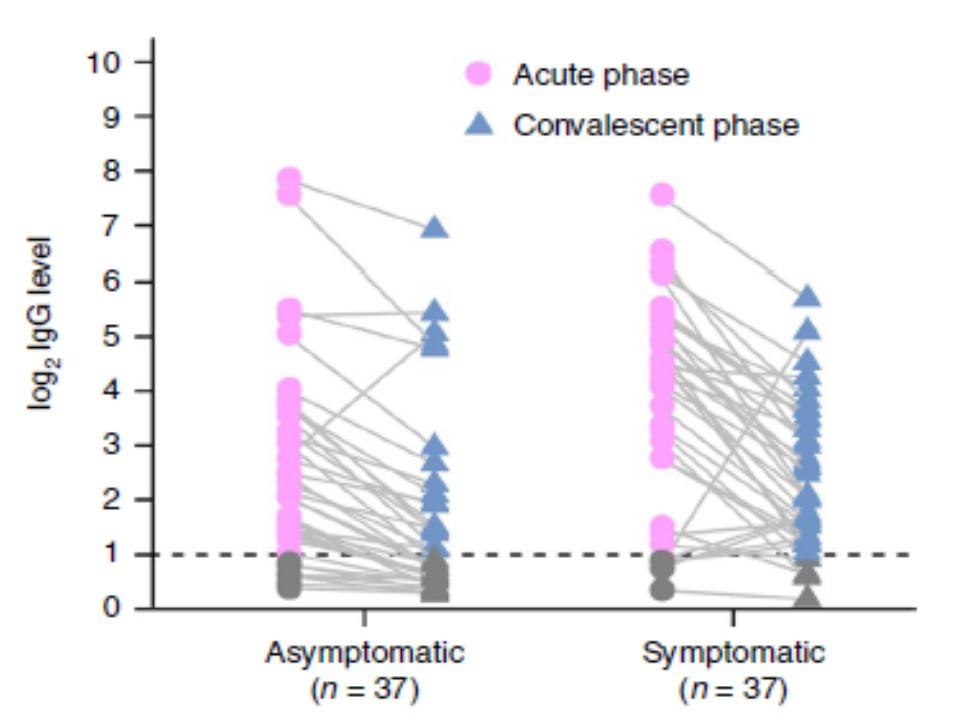 回復期のIgG抗体の低下を示すグラフ