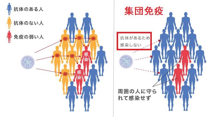 IgG抗体と集団免疫の関係を示す図