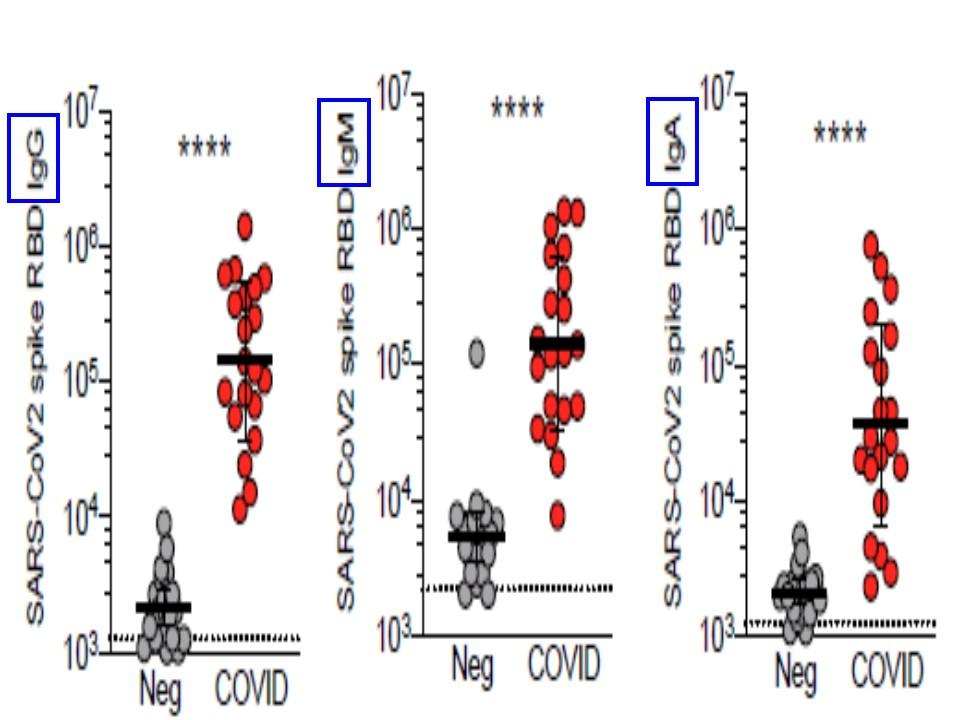 感染者はSタンパクに対するIgG IgM抗体を有することを示すグラフ