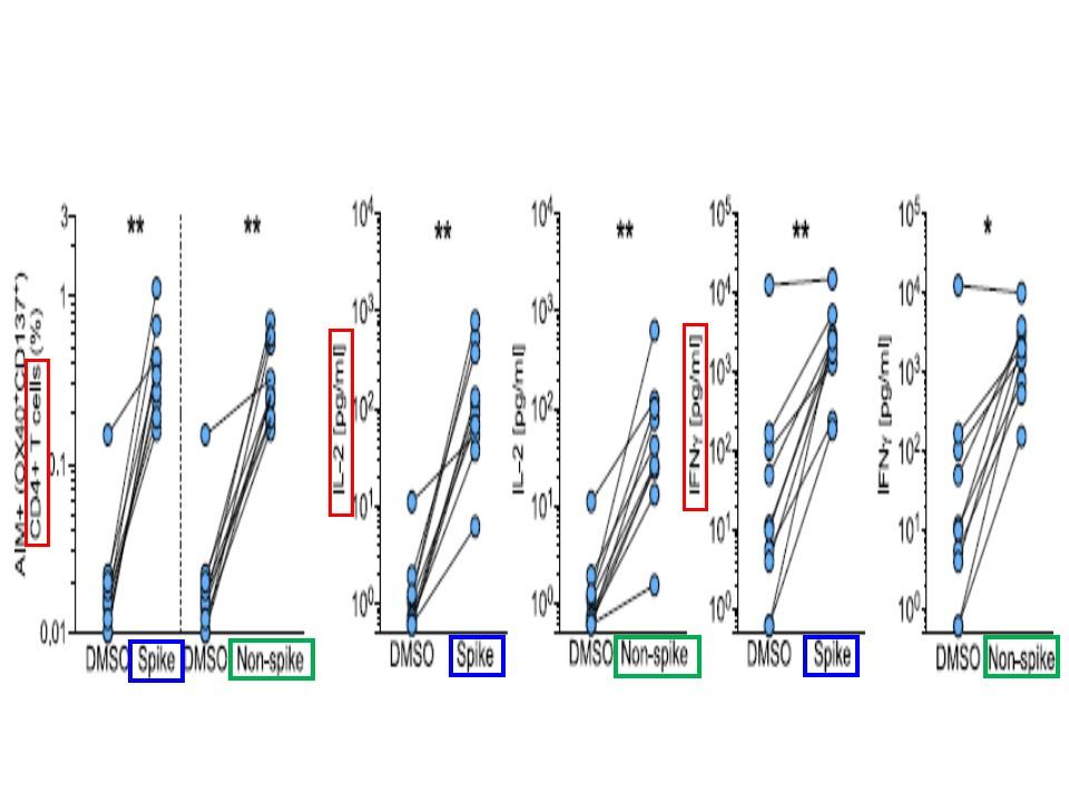 サイトカインを産生することを示すグラフ