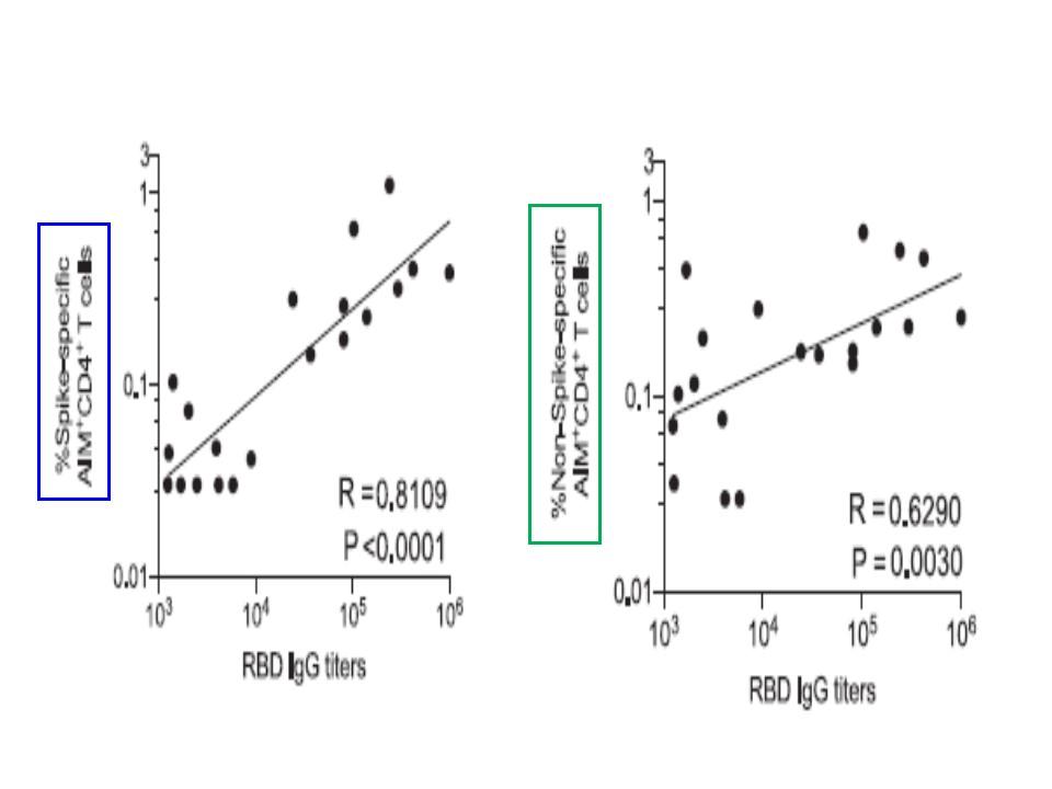 CD4+Tリンパ球が抗体産生に関わることを説明する図