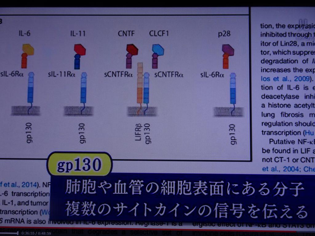 gp130について説明する図