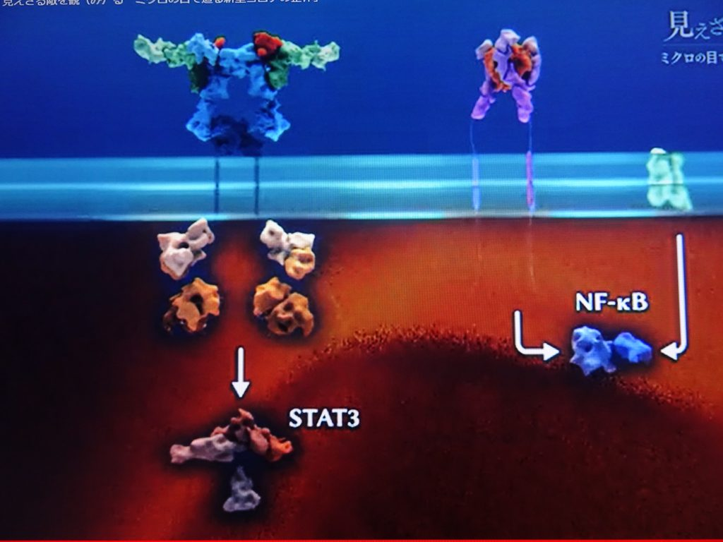 TNFによる炎症反応の増幅を示す図