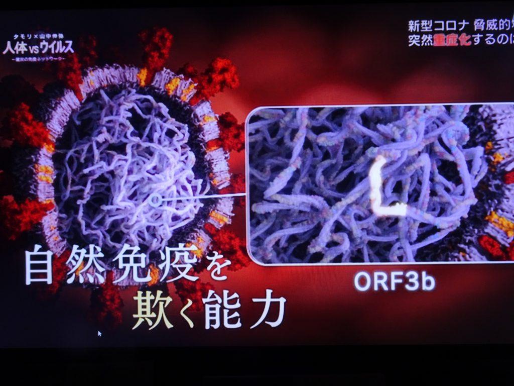 ORF3bについて説明する図