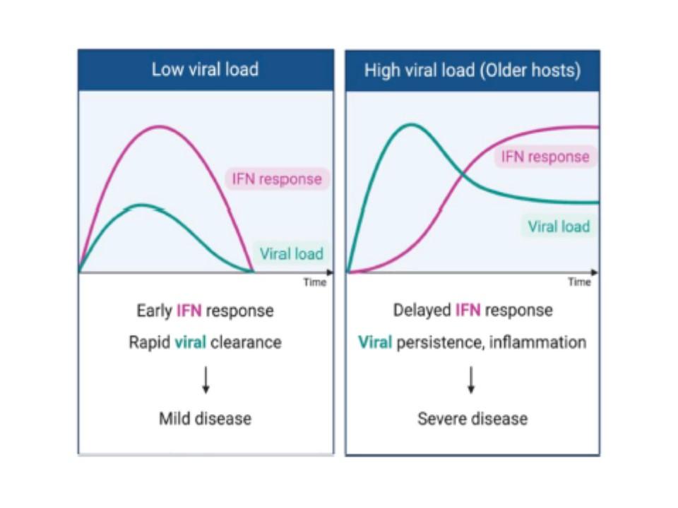 重症化例でインターフェロン産生量が低いことを示すグラフ