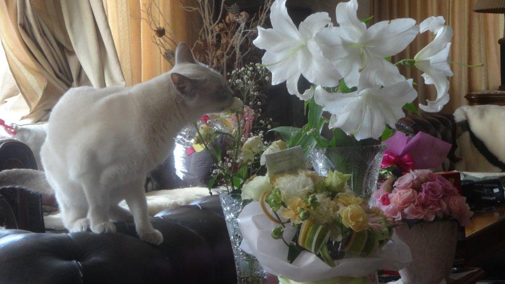 お供えのお花をかじる楓