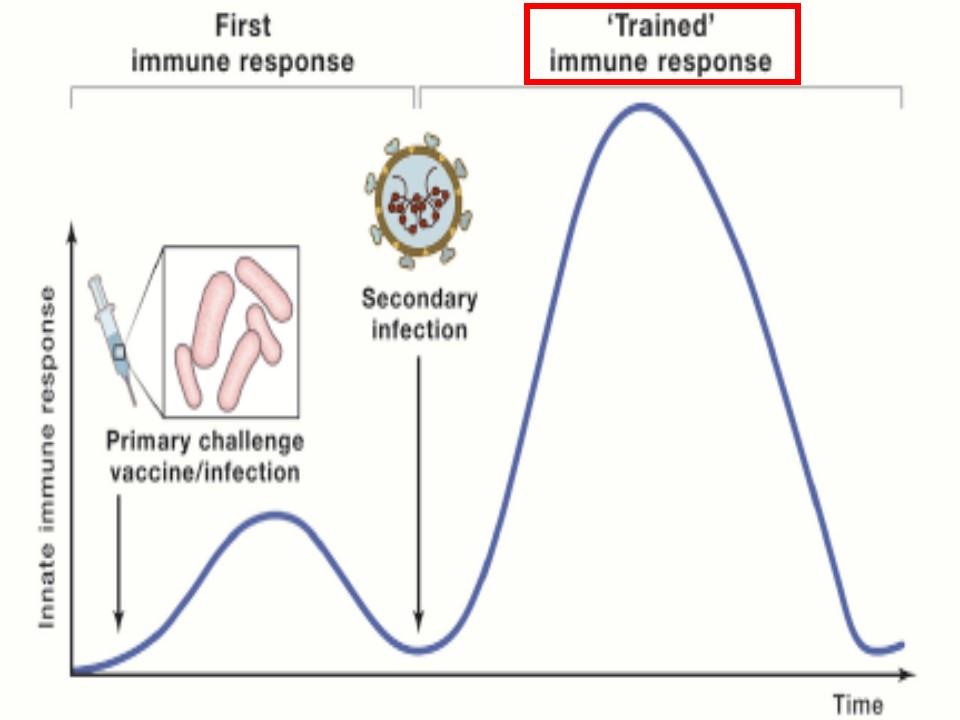 訓練免疫について説明する図