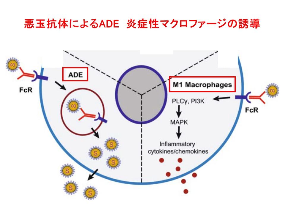 悪玉抗体の作用を示す図