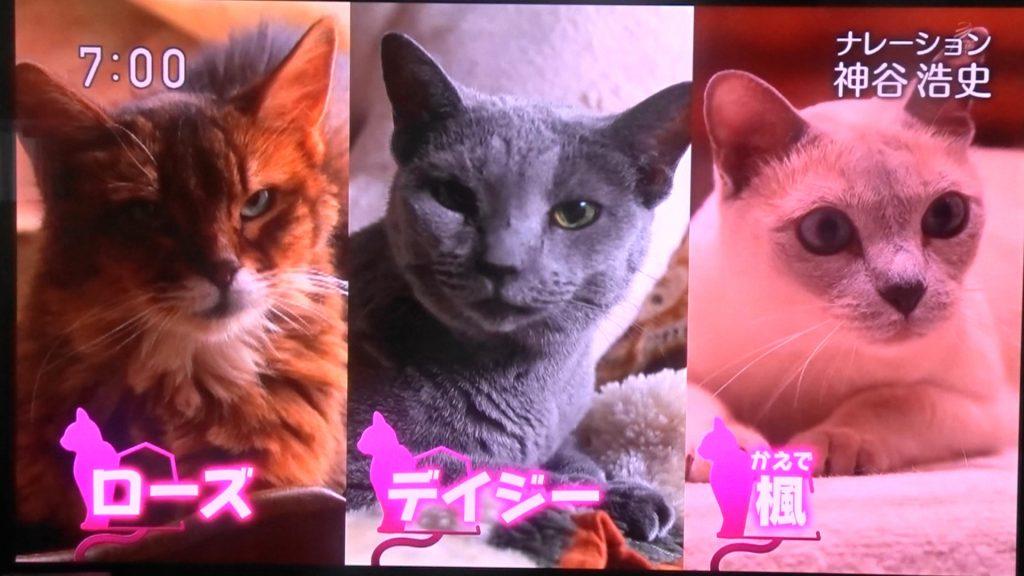 NHKで放送された ローズ・デイジー・楓
