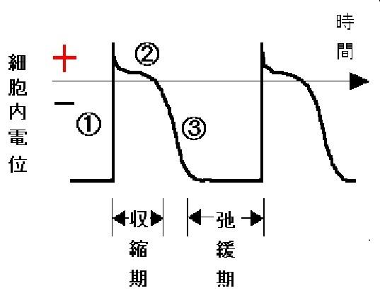 心臓は電気で規則正しく動くポンプ