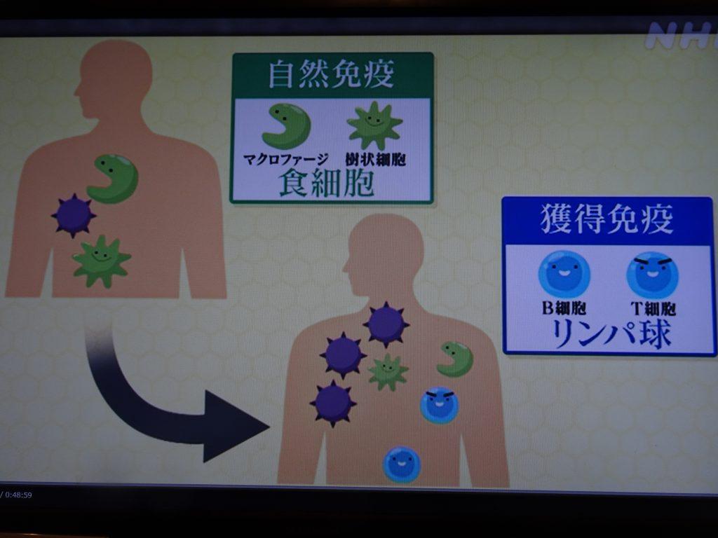 自然免疫と獲得免疫について説明する図