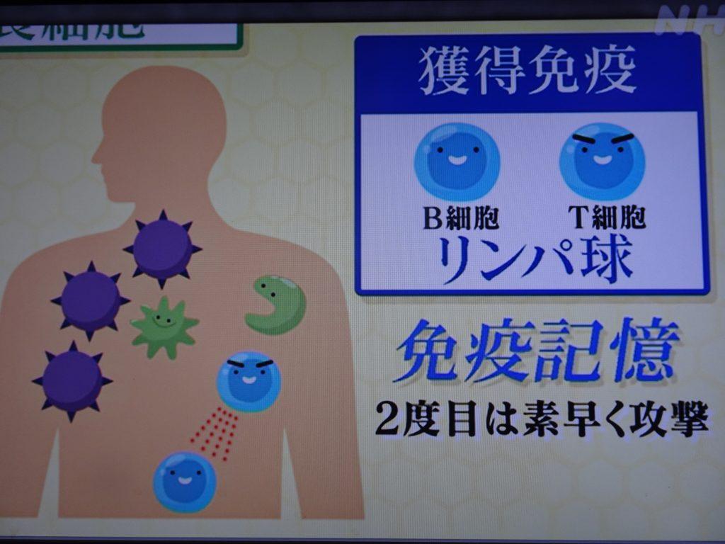 免疫記憶について説明する図