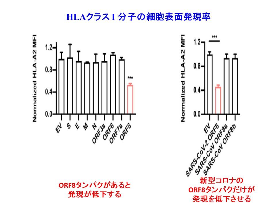 ORF8タンパク質によりMHCクラスⅠ分子の細胞表面の発現が低下することを示すグラフ