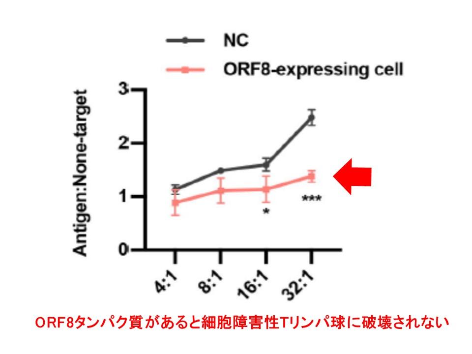 ORF8タンパク質により細胞障害性Tリンパ球によるダメージを受けにくくなることを示すグラフ