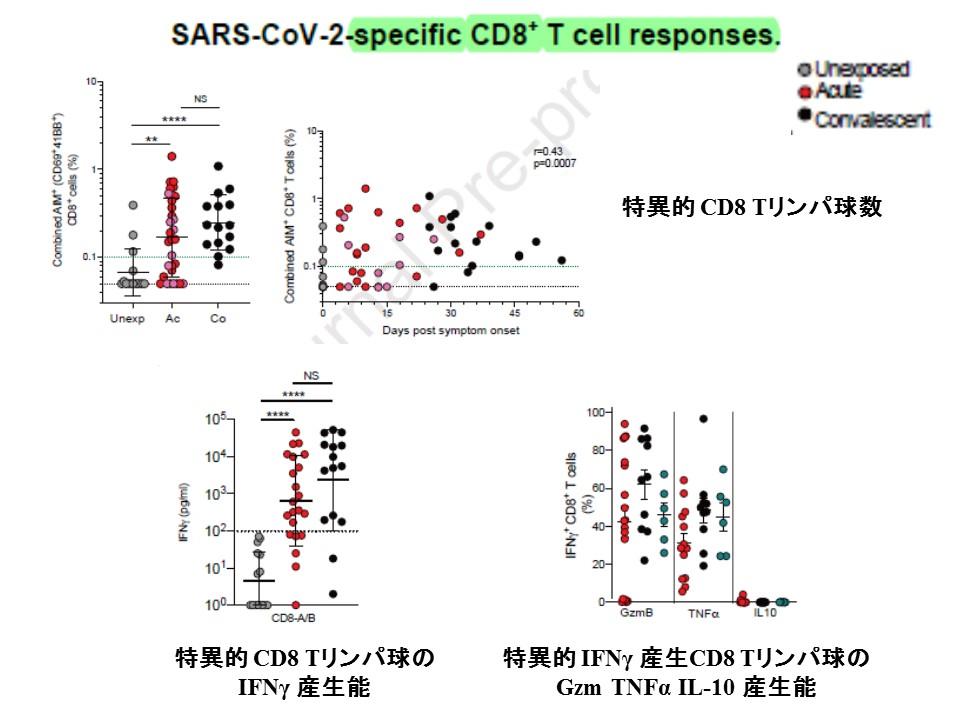 CD8・Tリンパ球に関するデータを示すグラフ