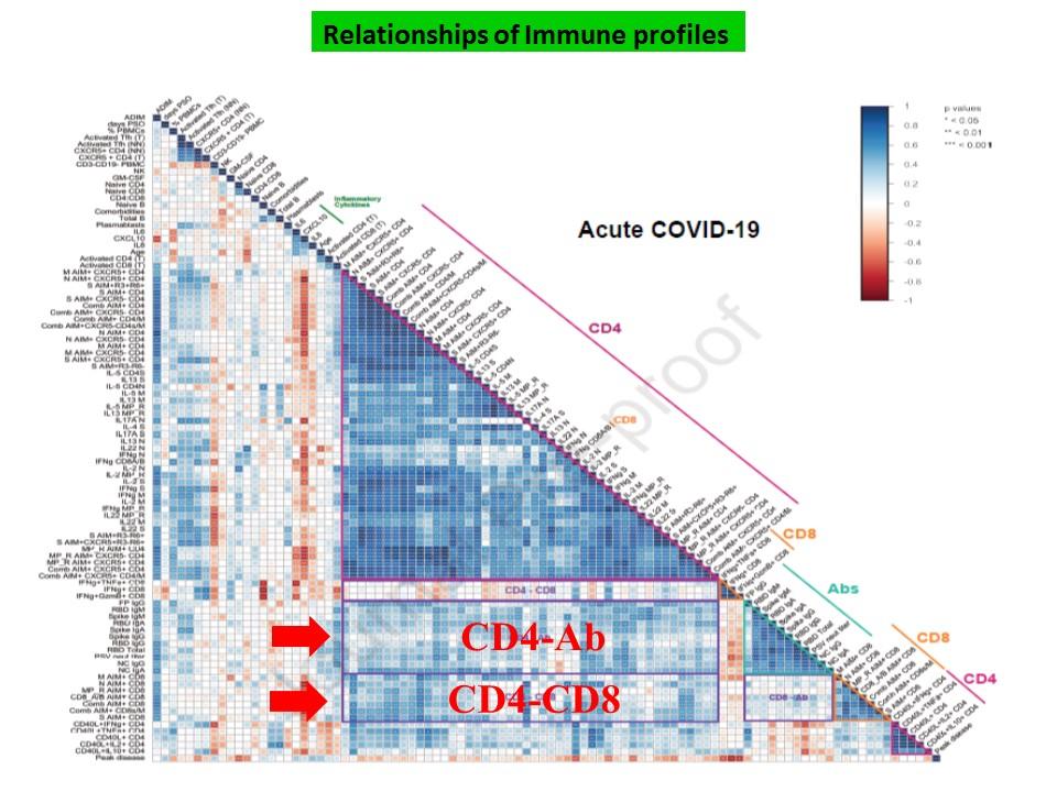 抗体 CD4・Tリンパ球 CD8・Tリンパ球反応の協調を示す図