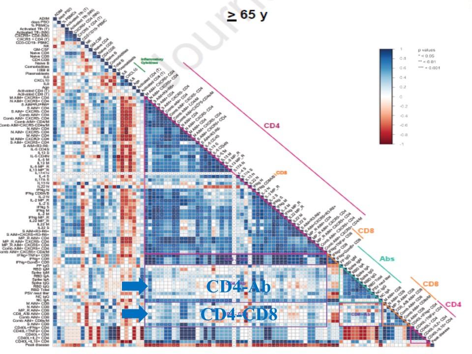 65歳以上の患者の抗体 CD4・Tリンパ球 CD8・Tリンパ球反応の協調を示す図