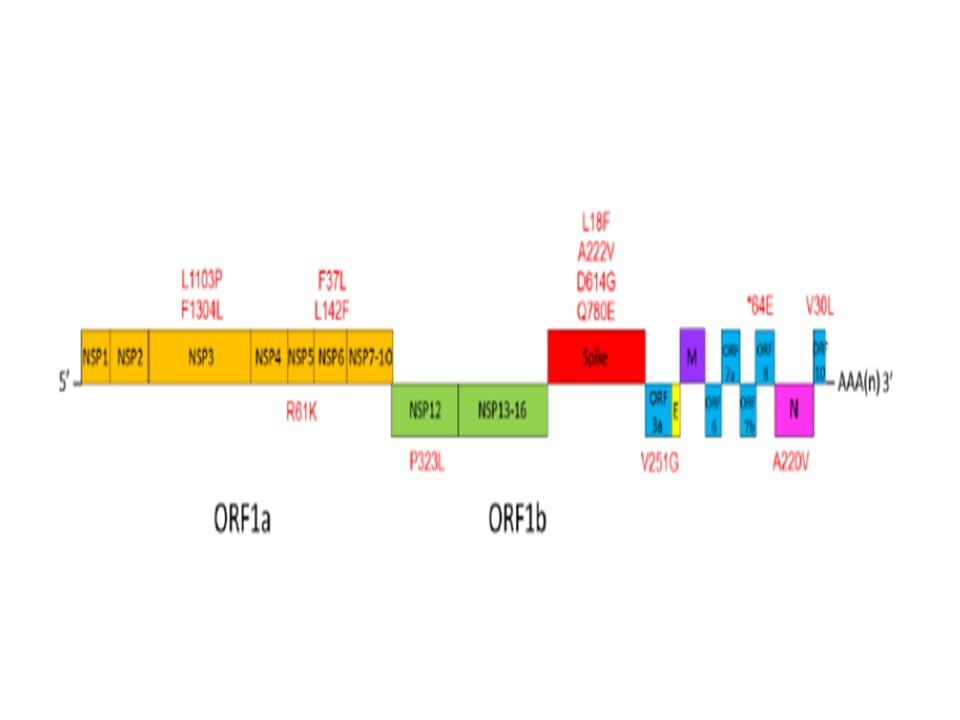 認められた塩基 アミノ酸残基の変異部位を示す図