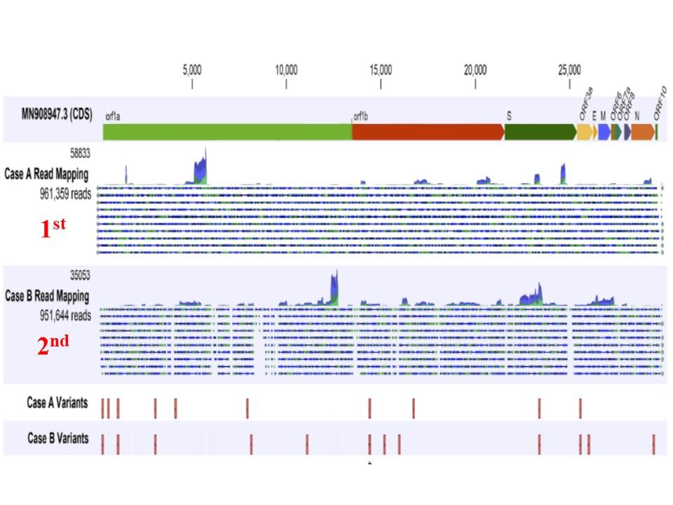 初感染 再感染時のウイルスで認められた変異を示す図