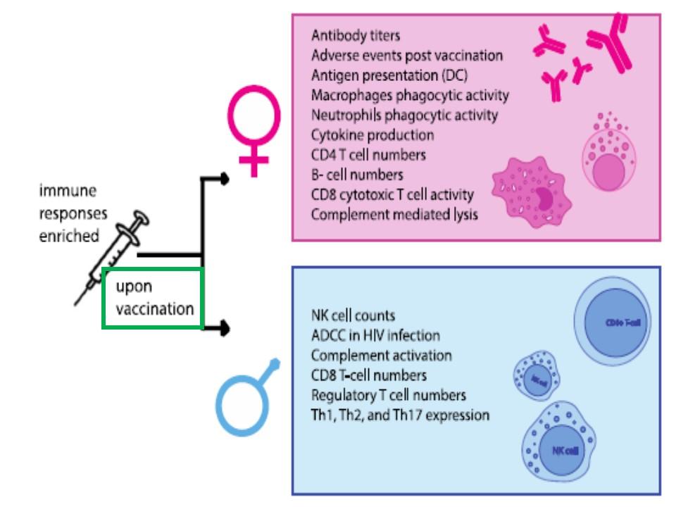 女性ではワクチンの副反応が起こりやすいことを示すデータ