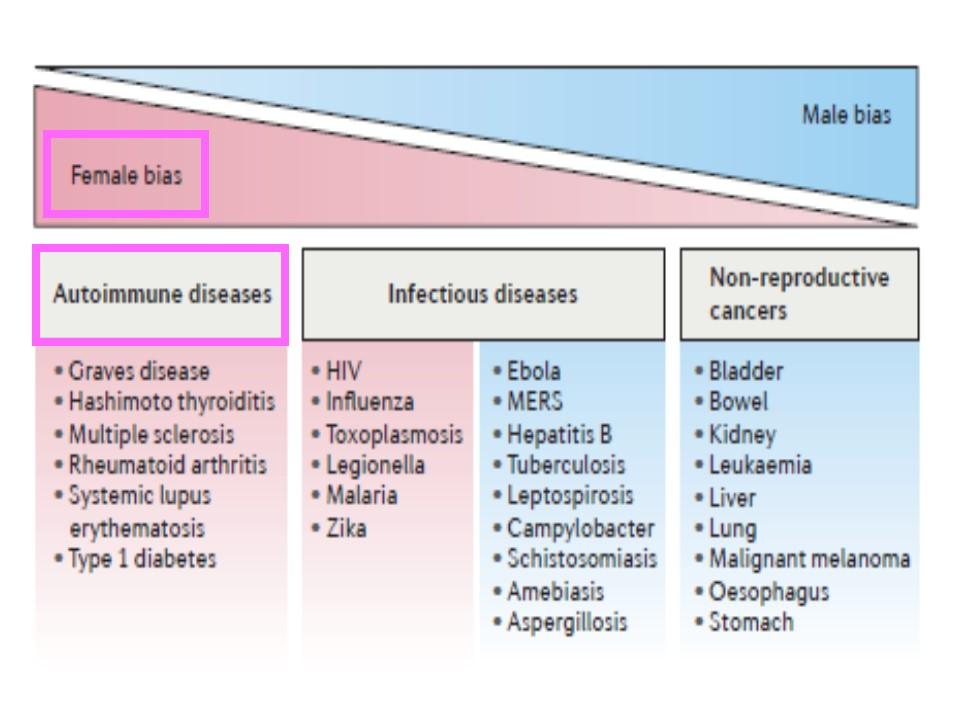 女性は自己免疫疾患になりやすいことを示す図