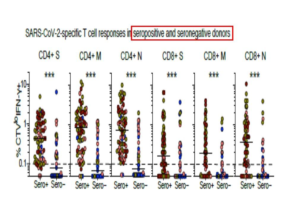 未感染者などでもTリンパ球が認められることを示すグラフ