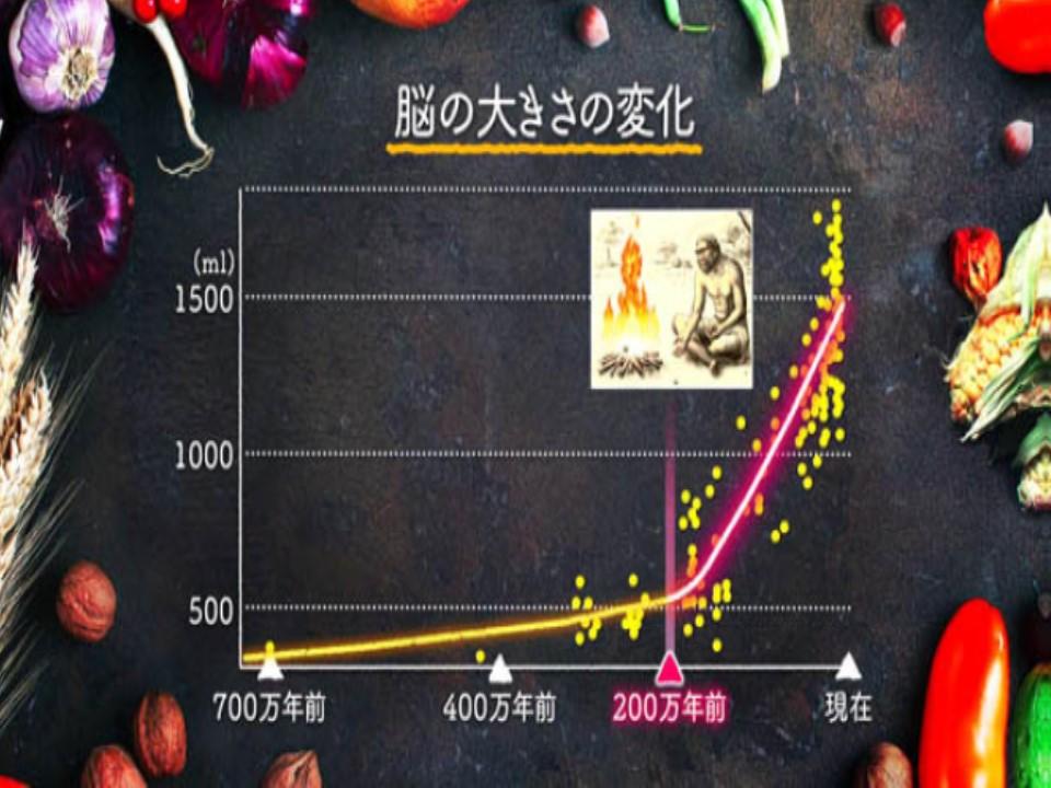脳の大きさの経時的変化を示すグラフ