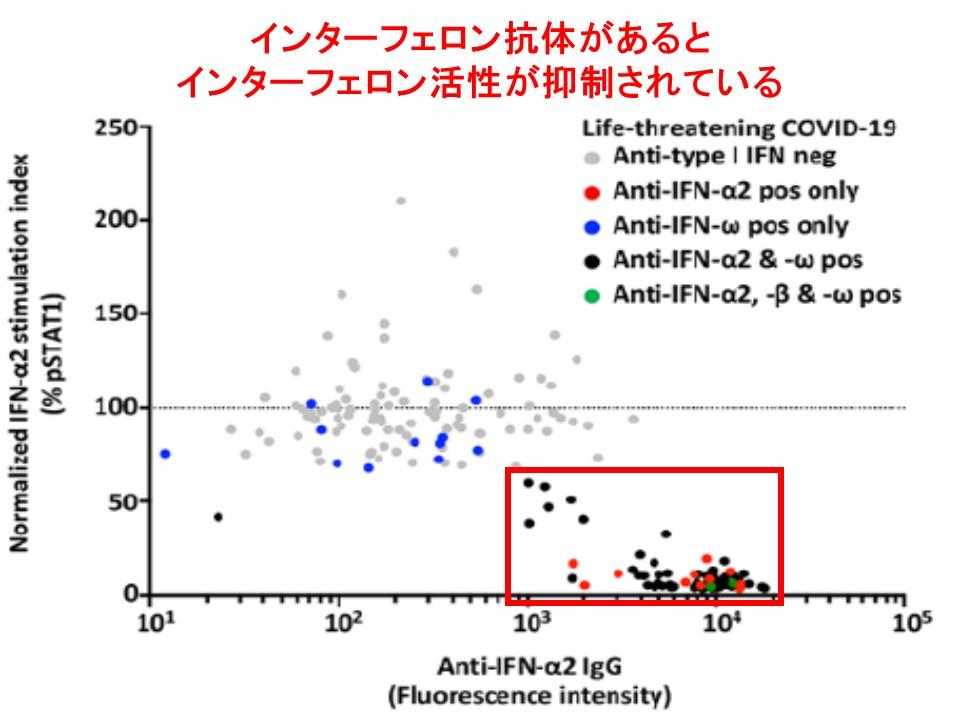 インターフェロンαに対する自己抗体が陽性だとインターフェロンα活性が抑制されていることを示すグラフ