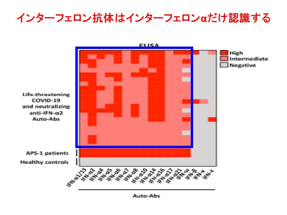 インターフェロンαに対する抗体だけ存在することを示す図