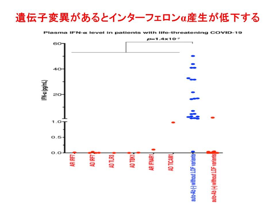 血中インターフェロンα濃度がほとんどゼロに近いことを示すグラフ