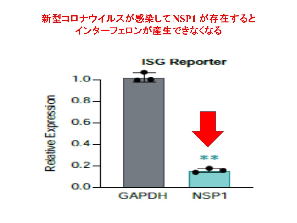 NSP1が存在しているとインターフェロンが産生されないことを示すグラフ