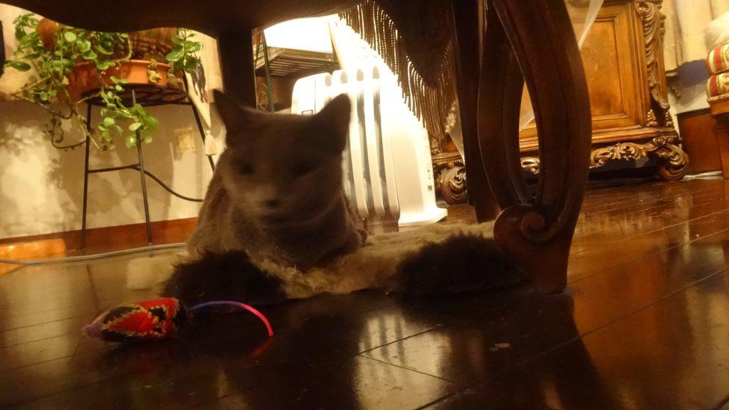 デロンギの暖房器の前で寝るデイジー