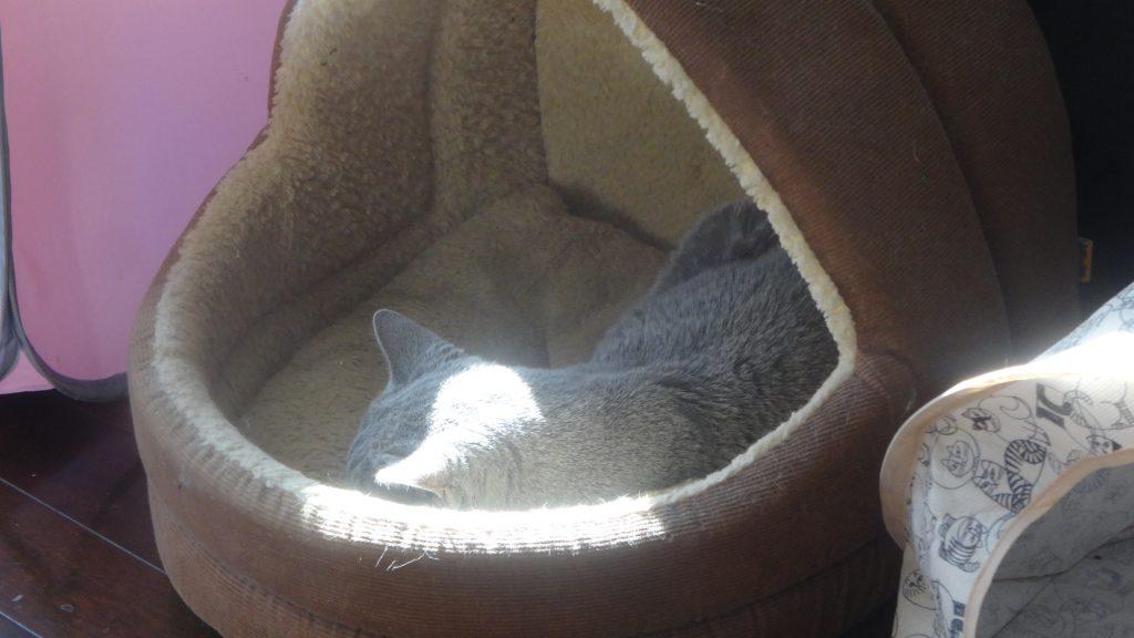 床の上のお釜型ハウスで昼寝するデイジー