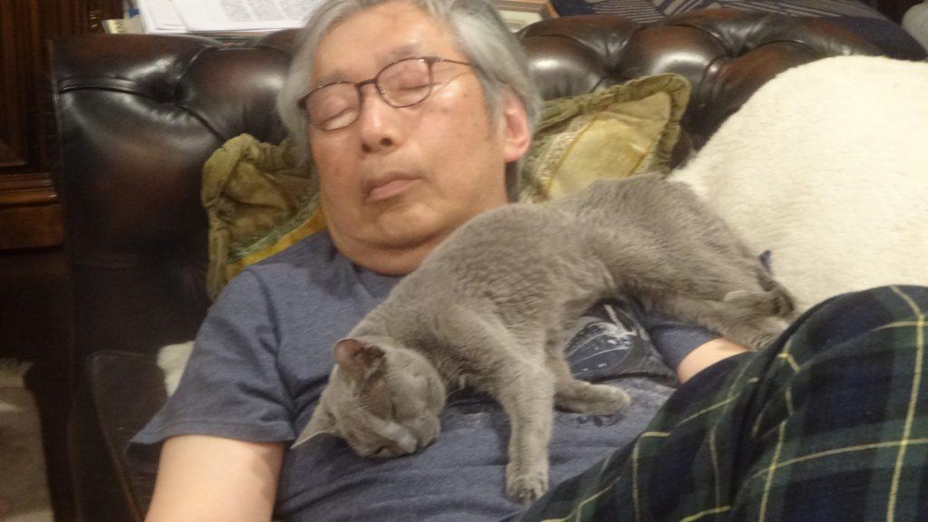 書き手のお腹を枕に寝るデイジー