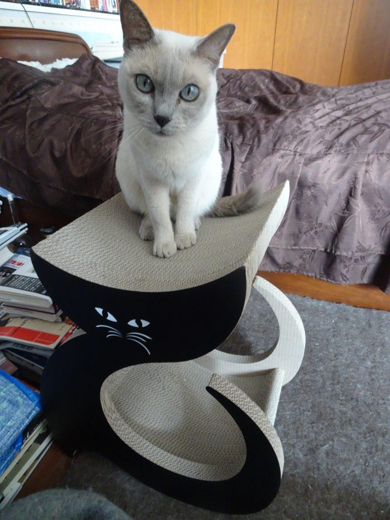楓の新しいお友達の黒ネコさん