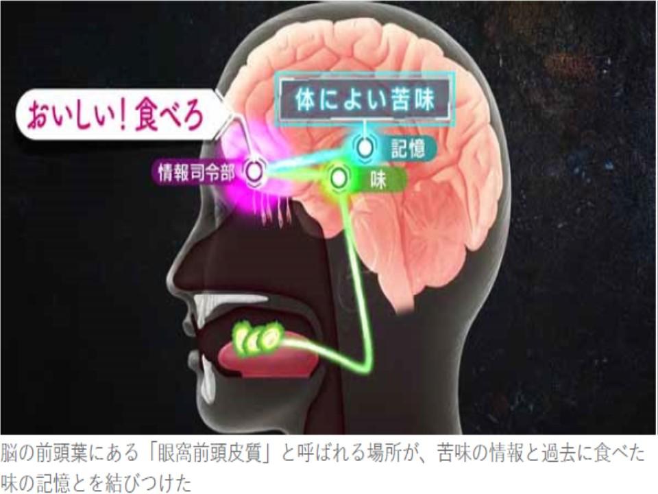 脳が過去の記憶を参照に一部の苦味を美味しいものと認識するようになった過程を説明する図