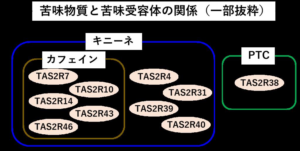 さまざまな苦味遺伝子を分類した図