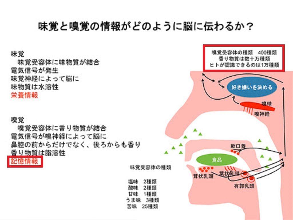 嗅覚と味覚の脳への伝わり方の差異を示す図