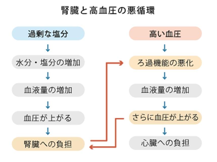 過剰な塩分摂取と高血圧の悪循環について説明する図