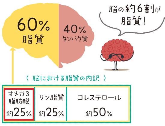 オメガ3脂肪酸が脳の発達に重要なことを示す図