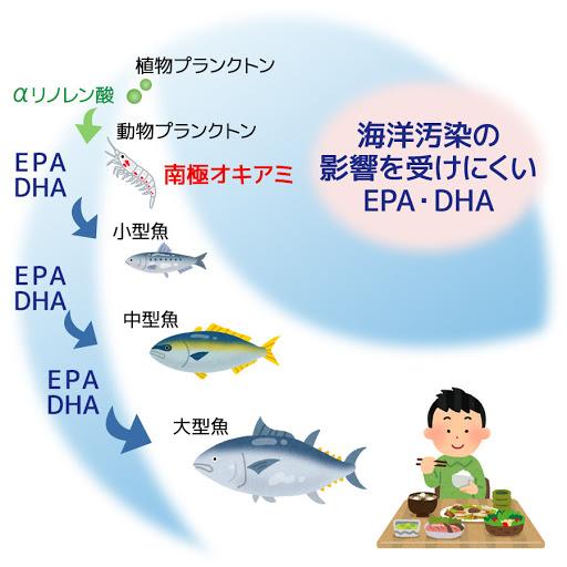 ヒトはオメガ3脂肪酸の食物連鎖の頂点にいることを示す図