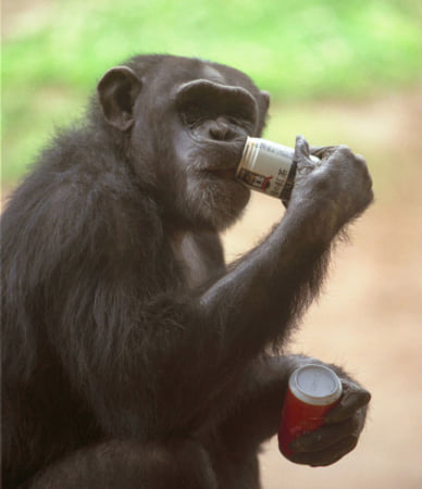 お酒を飲む類人猿