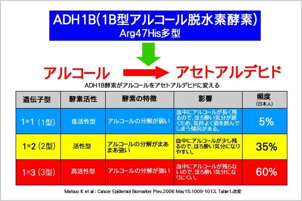 アルコール脱水素酵素の遺伝子多型について説明する図