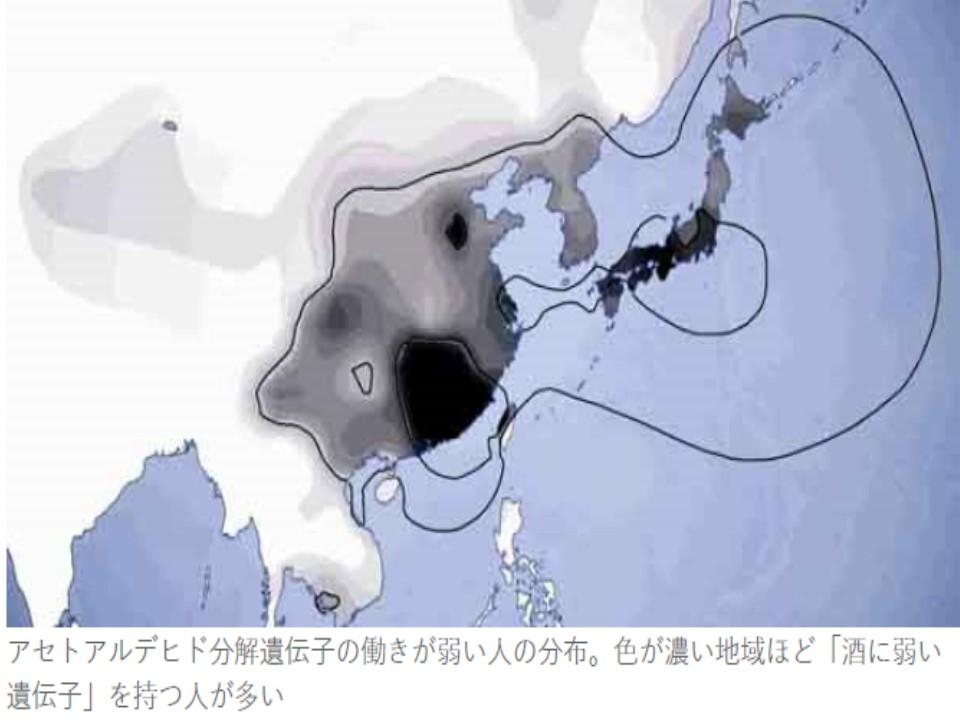東アジア一帯にアセトアルデヒド分解遺伝子の働きが弱い人が多く存在することを示す地図