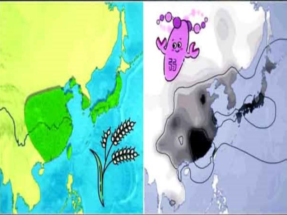 アジアでの稲作の広まり方のパターンとアセトアルデヒド分解遺伝子の働きが弱い人の存在パターンが類似していることを示す地図